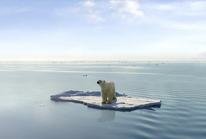 Ученые боятся появления опасных вирусов из Арктики