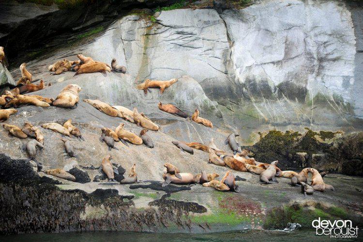 Картинки дикой природы канады