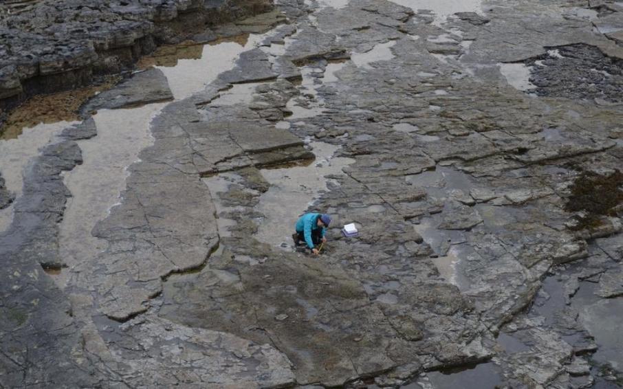 ВШотландии отыскали следы динозавров