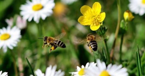 Народные депутаты защитят права пчел с помощью Уголовного кодекса