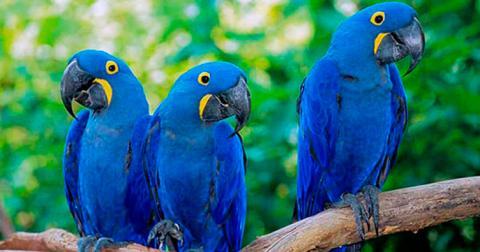 Суд признал воздушный шар виновником смерти редких попугаев